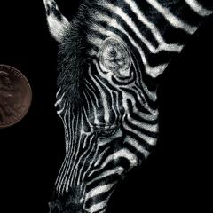 Grazing Stripes - Lonetta Avelar