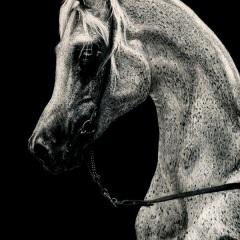 Refined Elegance - Lonetta Avelar